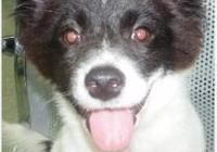 三個月大的流浪狗走丟了,見誰跟誰走,找不到家了真可憐