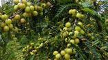 水果種植致富騙局,農民們請注意了,尤其是北方的