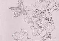工筆玉蘭畫法步驟及玉蘭線描稿欣賞