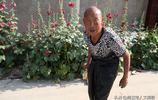 """山西農村76歲老人把騾子當""""兒子""""養,背後故事令人心酸"""