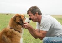 《一條狗的使命2》釋放5月催淚彈,瘋狂飆淚的經典作品再次迴歸!
