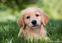 夏天怎麼給狗狗去跳蚤