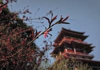 小說:博大精深的東北土匪文化