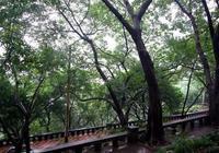 重慶人民公園,鬧中取靜,週末看萌寵好去處