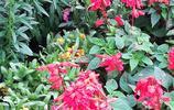 春日看花,南寧花卉公園有花正開放,景色真美,快來看看吧