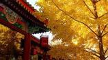 秋天要住在北平之秋——便是天堂