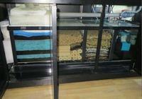 熱帶魚和冷水魚,它們使用的濾材是否應該一樣?