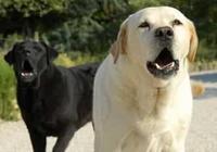 """為什麼小狗的叫聲是""""汪汪汪"""",而不是""""喵喵喵""""或者其他什麼聲音?"""