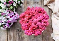 彩色花椰菜#520,美食撩動TA的心