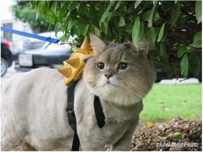 每次出門都要背上自己心愛的小包包!太萌了,想擼貓!