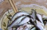 野生小河魚最香的做法,酥脆鮮香,椒香濃郁,祕製10條不夠吃