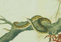 """飛天成龍,地上蛇精,家有65年蛇,19年將有一生中最大的""""坎"""""""