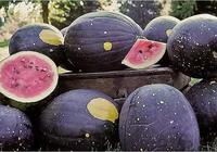 極品水果,罕見水果,天價水果