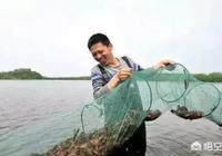 在農村養殖小龍蝦的學問很多,如何才能養出好的小龍蝦呢?