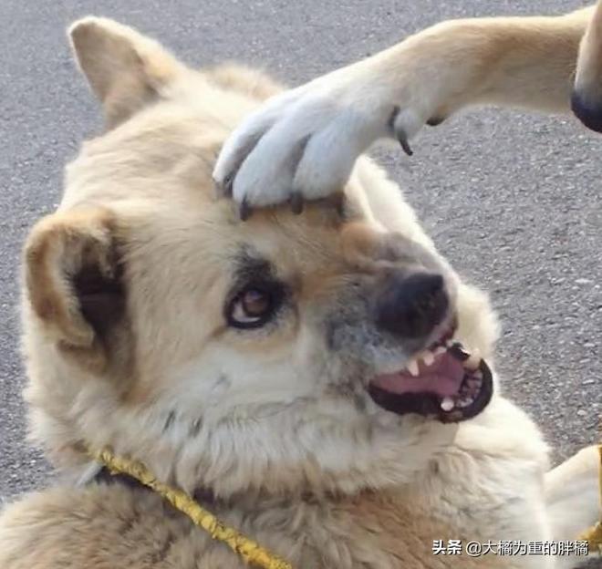 雙重拒絕!不願回家的狗子是拉不走的,10張狗狗耍賴圖讓你笑不停