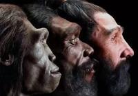 黑猩猩能否進化成人?非洲發現一隻類人黑猩猩,親近人愛站立行走