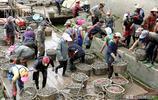 連雲港海蟶交易迎來旺季,日銷300多噸,漁民賺的盆滿缽滿