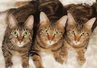 馬雲攜眾多貓咪進軍房地產,王健林慌了,貓奴笑了