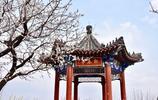 西山晴雪——西山森林公園四月天賞花季