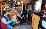 大狗熊被夫婦收養多年,2米高了還要抱抱親親舉高高