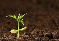 菌肥效果好,更得需要養,如何來養土壤微生物?