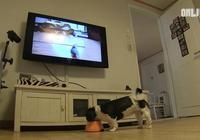 動物節目的忠實粉絲,狗狗要看節目才肯吃飯,只因家裡無人陪伴它
