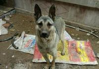 狗肉店裡救下一隻狗狗,帶回家後發現驚喜連連