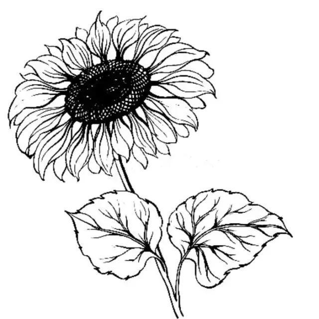 古詩:花草名錄集