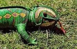 變色蜥蜴:生存環境