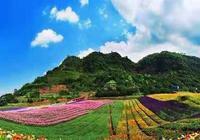 有花有田有溪谷,重慶的這個網紅景區也太好玩了