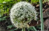 這幾種植物開的花結的籽十分相似,你能分辨出來它各是什麼嗎?