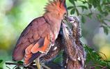 鳥類攝影之餵養,感謝父母的養育之恩