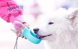 到寵物醫院才知道,冬天寵物除不能喝熱水外,還要注意這幾點