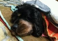 10多歲的狗狗去世,留下的遺產讓主人失控大哭!