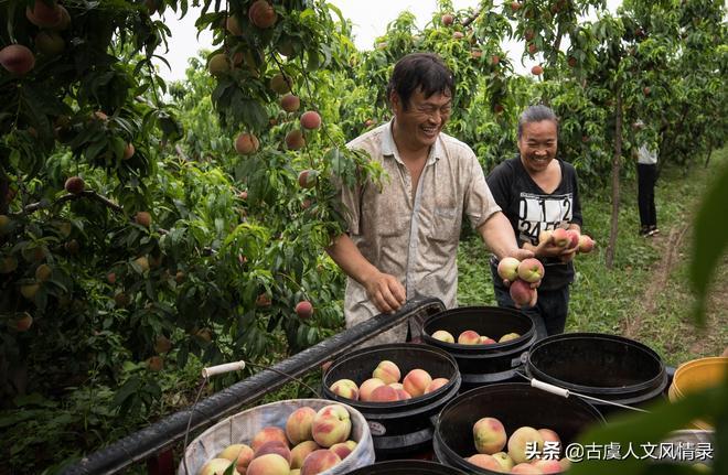 晉南鮮桃開園,為啥80歲老人悶熱天坐大路邊看桃,聽他怎麼說