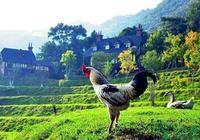 農業+健康=中國特色養生農業