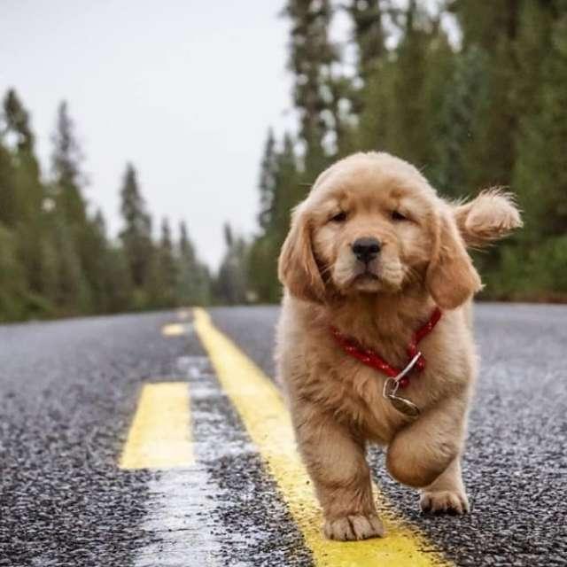 免費領養狗狗的正確方法,請給它們一個溫暖的家