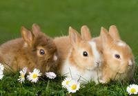 兔子為什麼是豁豁嘴