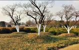 合肥旅遊攻略:合肥植物園:十里花香在等你,賞景遊玩兩不誤