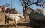 """這個山村真是大,""""望山跑死馬"""",有40多個自然村分佈26平方公里"""