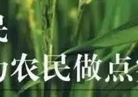 水稻擱田,晾田、晒田、烤田都是啥?有啥區別!