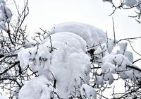 天水春雪撩人 如夢如幻!(幸福天水)
