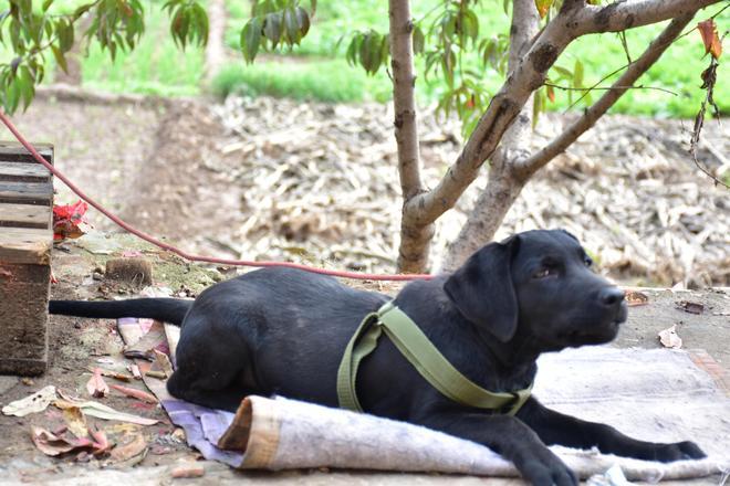 洛陽農村的一貓一狗,讓農家小院歡樂不斷,白貓黑狗搭配完美