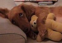 為什麼狗狗那麼喜歡睡床?其實原因有5個,你就別嫌棄了!
