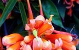 美麗的花兒就像陽光,讓人覺得溫暖、明亮