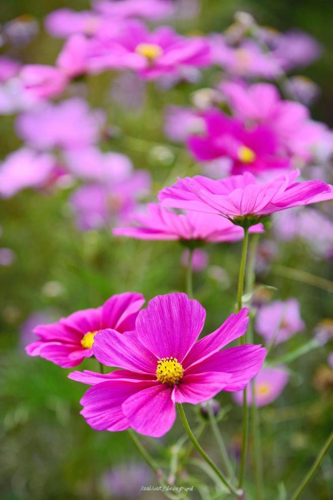 各種花草的美照 我用荷花牡丹當壁紙了 你能叫出他們的名字嗎