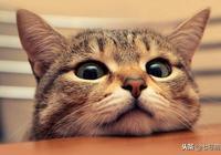 女主帶貓咪去公司,貓咪用杯子喝水時表情奇怪,主人這次臉丟大