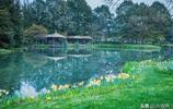 每逢春暖花開之際,杭州太子灣公園便成為了攝影愛好者的天堂!