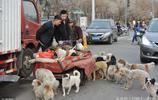 七旬老太有家不回,與40多隻流浪狗在街頭相依為命,撿垃圾養狗