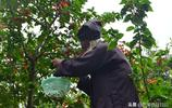 雲南深山有個財神殿,居住著一位90歲老人,身手矯健能爬樹摘櫻桃